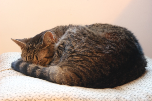 cozy cat 2