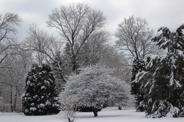 winter tranquility 3