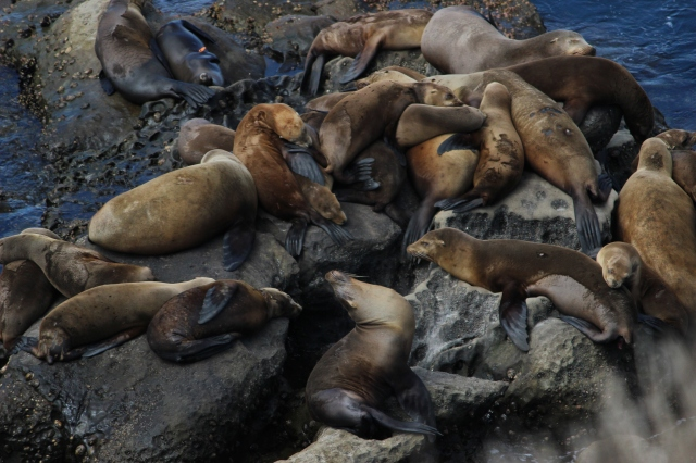 pile of seals